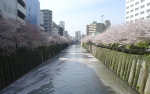 20080405-06(水web).JPG