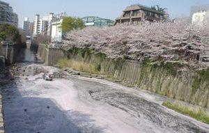20080405-07(水web).JPG