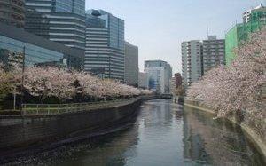 20080405-02(水web).JPG